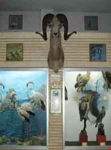 Natural history museum of tabriz