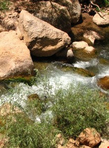 Cheshmeh naz protected area