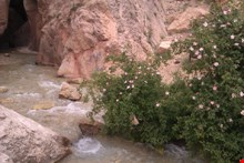 Datan canyon