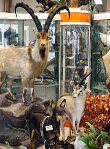 Iran Wildlife and Nature Museum ( Darabad )